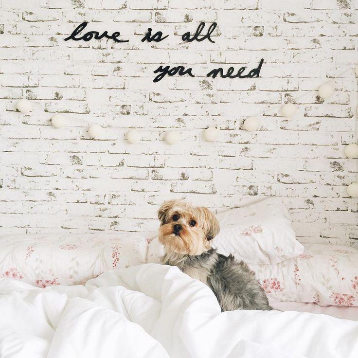 """I woke up like this  #flawless #spock #yorkshire #pet #dog #bed #cama #bedroom #quarto"""