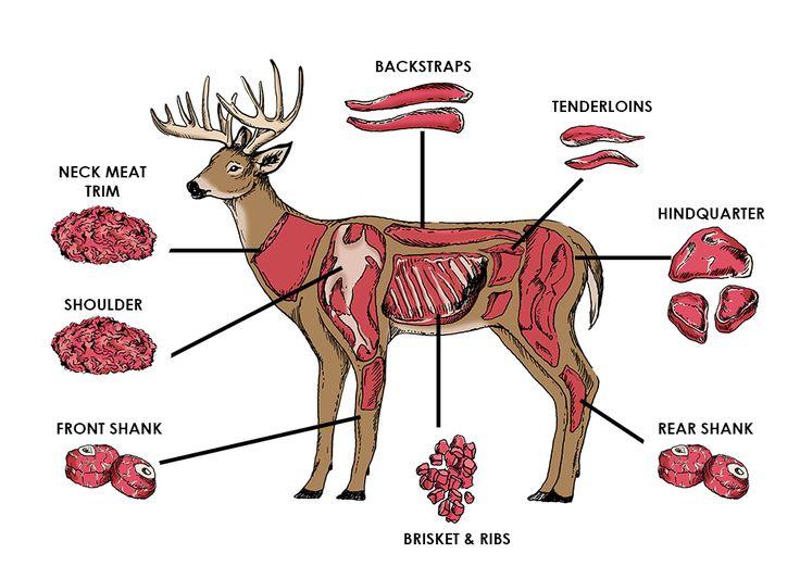 Field Dressing A Deer Diagram Learn More Fieldtorq Knives
