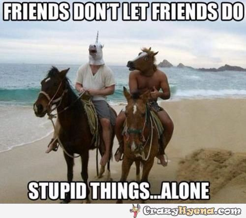 8 best Funny horse quotes images on Pinterest | Funny ...