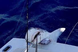 Resultado de imagem para pesca em alto mar