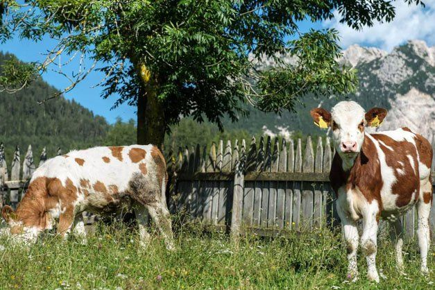 """Roter Hahn"" farm stay: Pinei in Enneberg/Marebbe South Tyrol in the Italian Alps"