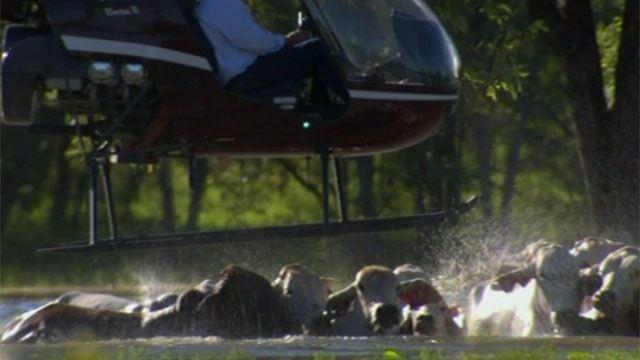 Ausztrália modern cowboyai ló helyett helikopterrel terelik az állatokat. Benn Tapp ausztrál farmer egyetlen farmja közel 370 ezer hektár, melyen kb. 20 ezer szarvasmarha legelészik. Az ázsiai piacokon jól jövedelmező a marhahús export, így ha eljön az idő Tapp felhajtja a...