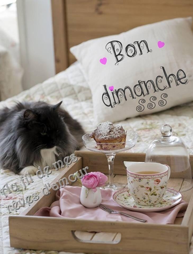 Bon dimanche #dimanche chat petit dejeuner bon dimanche