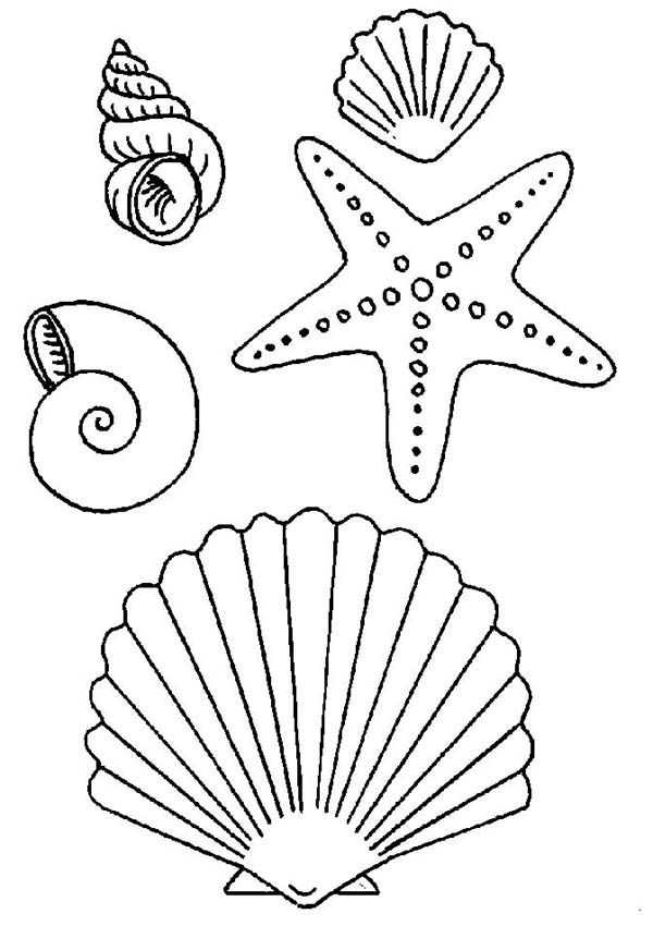 Seashell Many Types Of Seashells And Starfish Coloring Page In 2020 Seashell Drawing Fish Coloring Page Coloring Pages