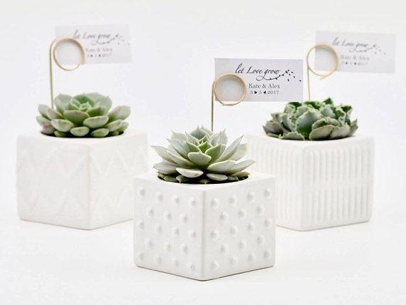 Suculenta favorece en ollas de cerámica moderna, bombonieres suculenta novia, regalo corporativo suculentos regalos en Sydney - mínimo 20 plantas