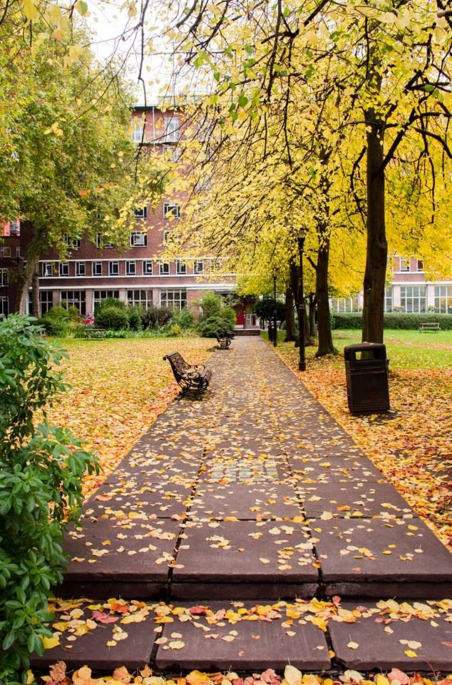 Autumn in the square - photo by Dr Marianne Baker