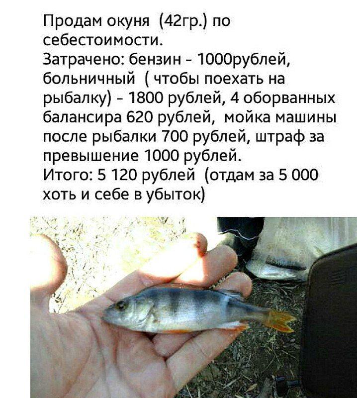 Смешная картинка продам рыбу, поздравления новым годом