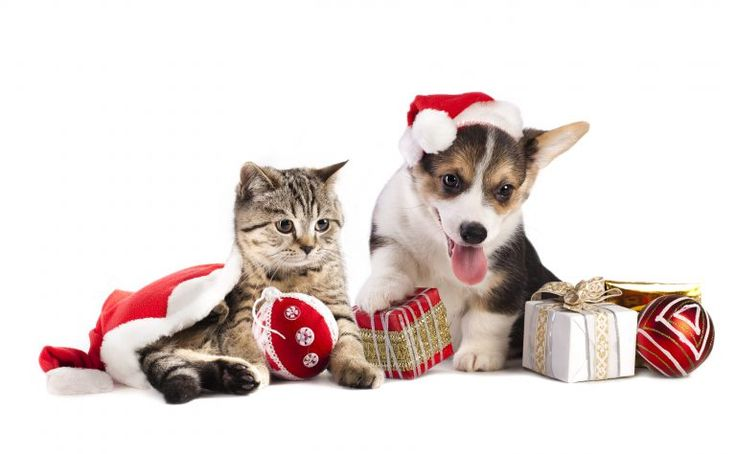Considering a pet this Holiday? Why not adopt - Adding a new dog or cat to the family is an exciting and wonderful time.  So many decisions to make — breed, size, temperament, puppy/kitten or adult, indoor or outdoor, shedding vs non-shedding, allergy considerations, grooming maintenance requirements, home training or professional training, pe... - https://www.triwnews.com/columns/considering-a-pet-this-holiday-why-not-adopt/