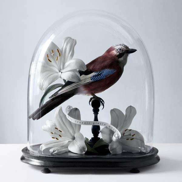 Histoires Naturelles: Conceptual Photography by Juliette Bates