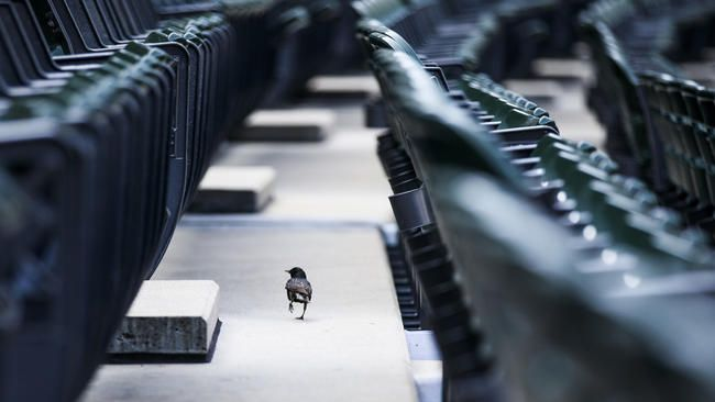 Small stroll: a bird walks through the stands before the Chicago White Sox play the New York Yankees. Armando L. Sanchez.