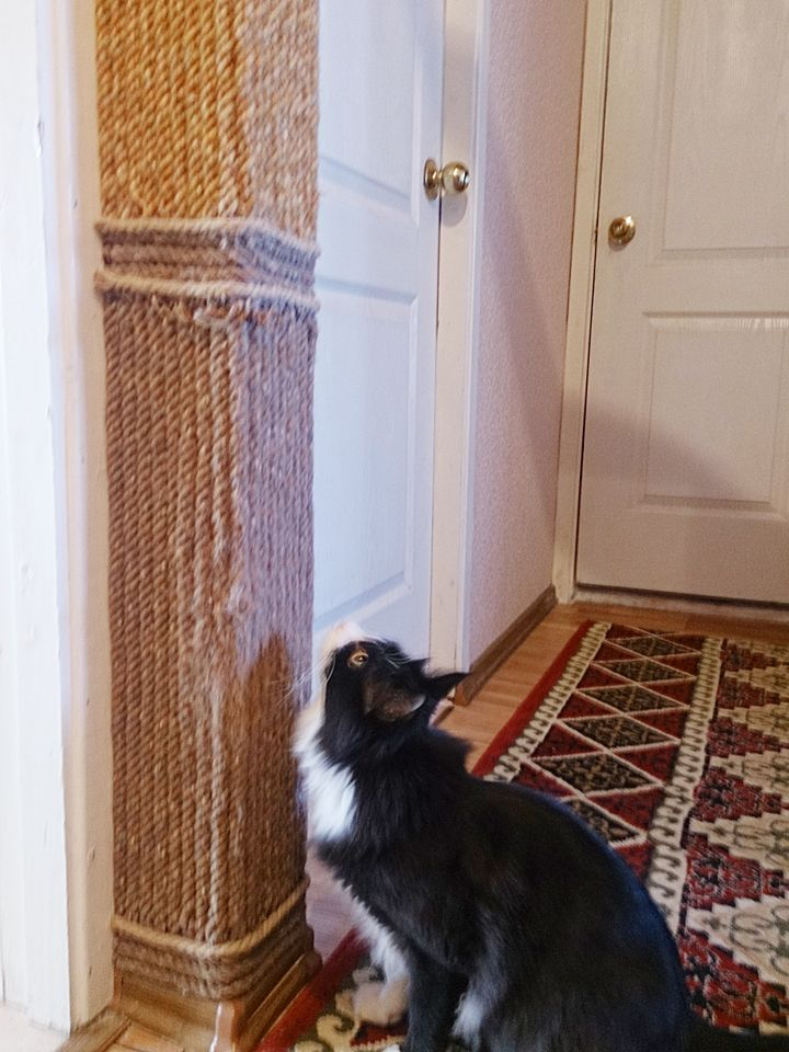Кот в доме Сначала кот должен определиться с любимым местом порчи обоев. Изобретательные любители кошек обшили стену толстым  шерстяным канатом. Смотрится очень даже хорошо. И кот доволен и хозяева тоже.