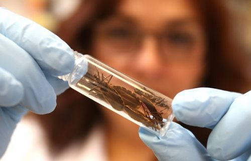 Doença de Chagas aumenta risco de morte na fase assintomática minutobiomedicina.com.br