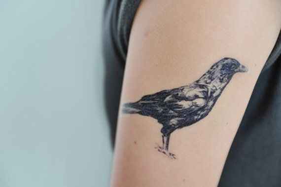 Here we have a detailed crow drawing available as a temporary tattoo. Designed by Joelle Poulos.  These crow temporary tattoos are perfect for
