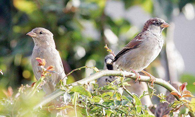 Rising car fumes 'killing sparrows' http://www.dailymail.co.uk/~/article-4366380/index.html?utm_campaign=crowdfire&utm_content=crowdfire&utm_medium=social&utm_source=pinterest  #LessPolution