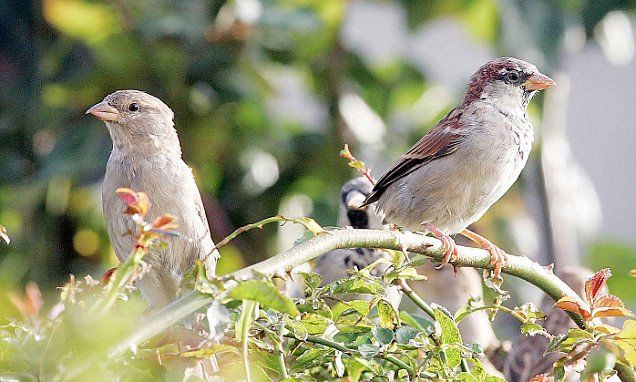 Rising car fumes 'killing sparrows' http://www.dailymail.co.uk/~/article-4366380/index.html?utm_campaign=crowdfire&utm_content=crowdfire&utm_medium=social&utm_source=pinterest  #LessPolution