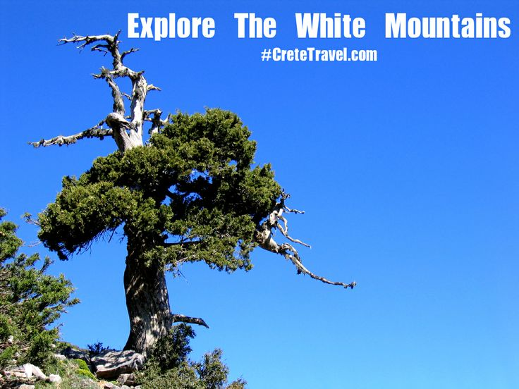 Explore the White Mountains, Visit a Winery, Learn more about an original Shepherd's Hut ... ! Ready to Book : http://www.cretetravel.com/activity/explore-the-white-mountains-of-crete/