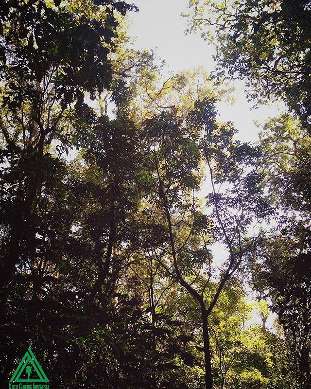 Perhatikan dengan teliti ada apa di atas sana.. . Kutu Gunung Indonesia (WA SMS 0838-0808-3888 ...