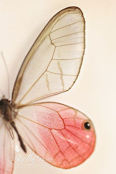 Butterfly Photography- Butterfly Wings Print, Pink ...