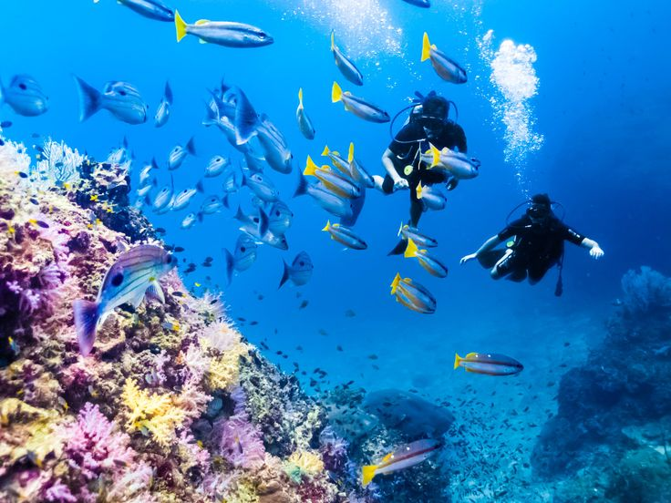 Scuba Diving in Thailand's Phi Phi Island