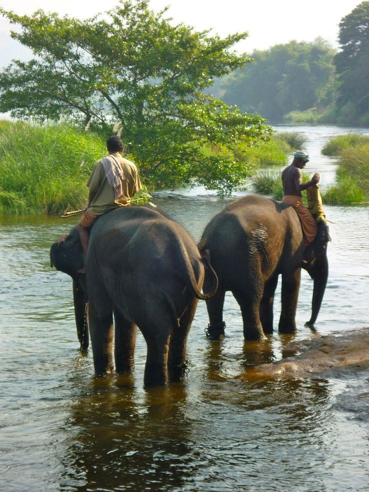 Watching the Elephants in the river in Thiruvananthapuram, Kerala. http://www.facebook.com/wildlifetourisms