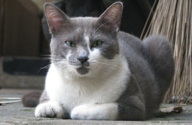 Yuk, Kenalan dengan 2 Kucing Endemik Indonesia! Siapa Saja?  http://jitunews.com/read/19850/yuk-kenalan-dengan-2-kucing-endemik-indonesia-siapa-saja #Jitunews
