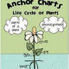 Plant Life Cycle Anchor Charts {FREEBIE}