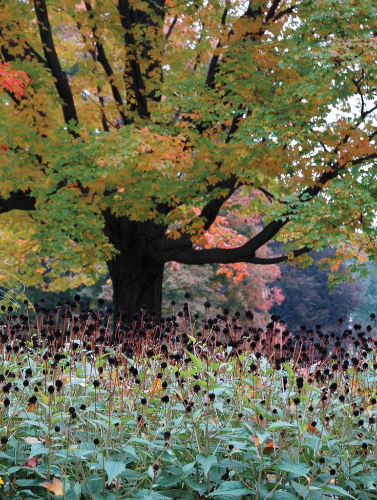 Mount Auburn Cemetery, with its vast collection of magnificent plants, is designed to be glorious in every season.  Friends of Mount Auburn Cemetery