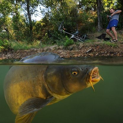 Carp Fishing Tips