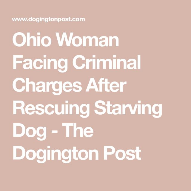 Ohio Woman Facing Criminal Charges After Rescuing Starving Dog - The Dogington Post