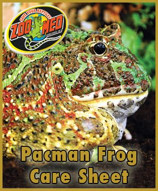 Check out Zoo Med's custom Care Sheet for Pacman #Frogs. Find more Care Sheets available on our website.