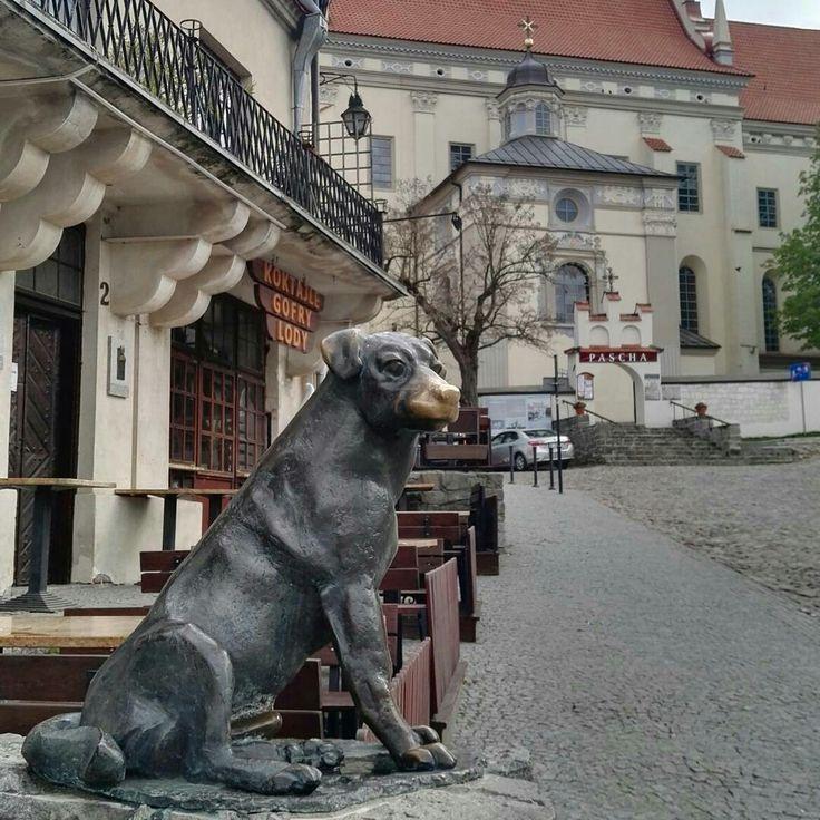 #kazimierzdolny #dog #statue #church #travel #poland #beautiful #small #town #pensjonateger #egerguesthouse #egerkazimierz