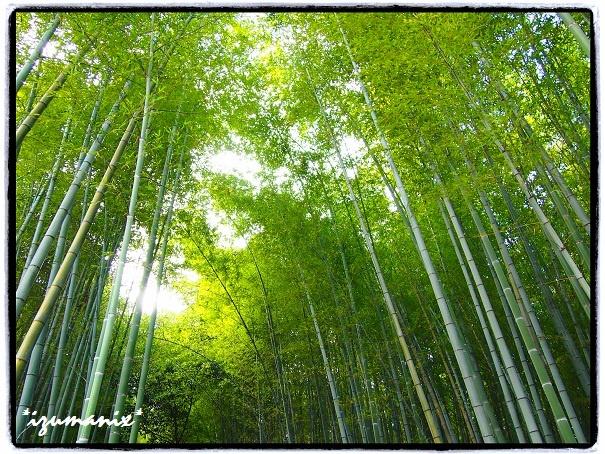 @京都 嵐山(Kyoto Arashiyama)
