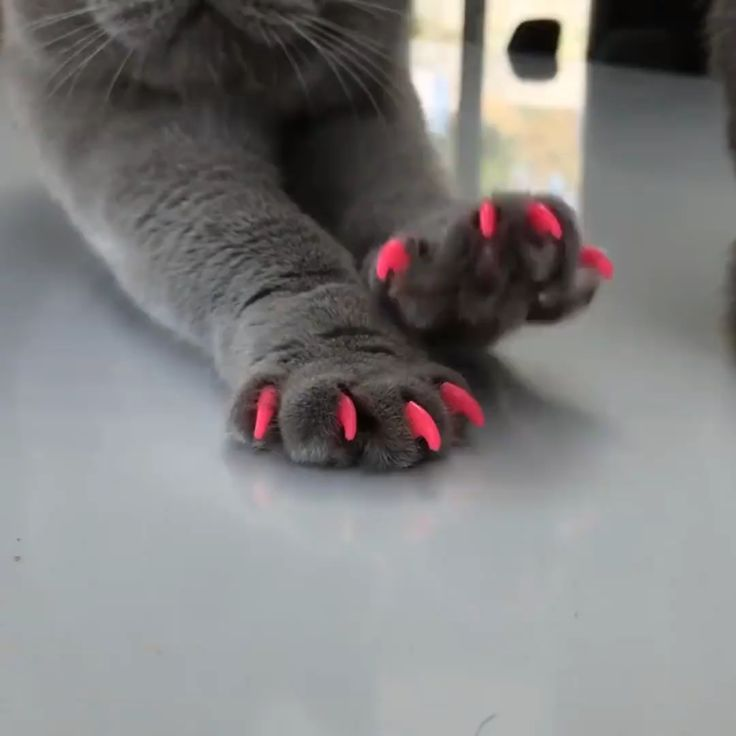 20pcs bunte Haustier-Katzen-Greifer-Abdeckungen Klimahundenagel-Dekorations-Abdeckungen mit Kleber – Tiere