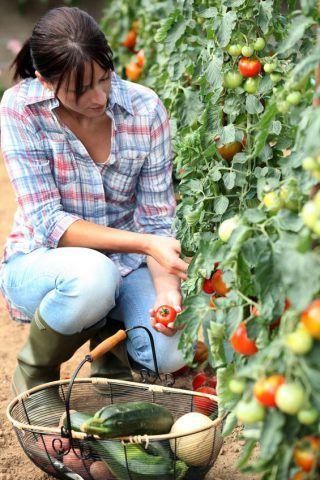 Fiches de culture bio: le potager et les légumes.
