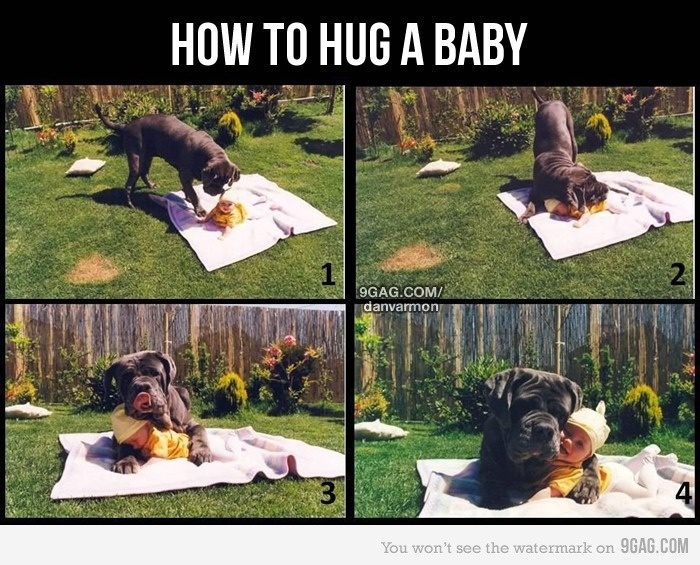 awwwwww: Dogs Hugs, Sweet, Funny Pictures, So Cute, Pet, Puppys, Neapolitan Mastiff, Baby Dogs, Big Dogs
