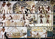 Grape cultivation, winemaking, and commerce in ancient Egypt ca. 1500 BCE