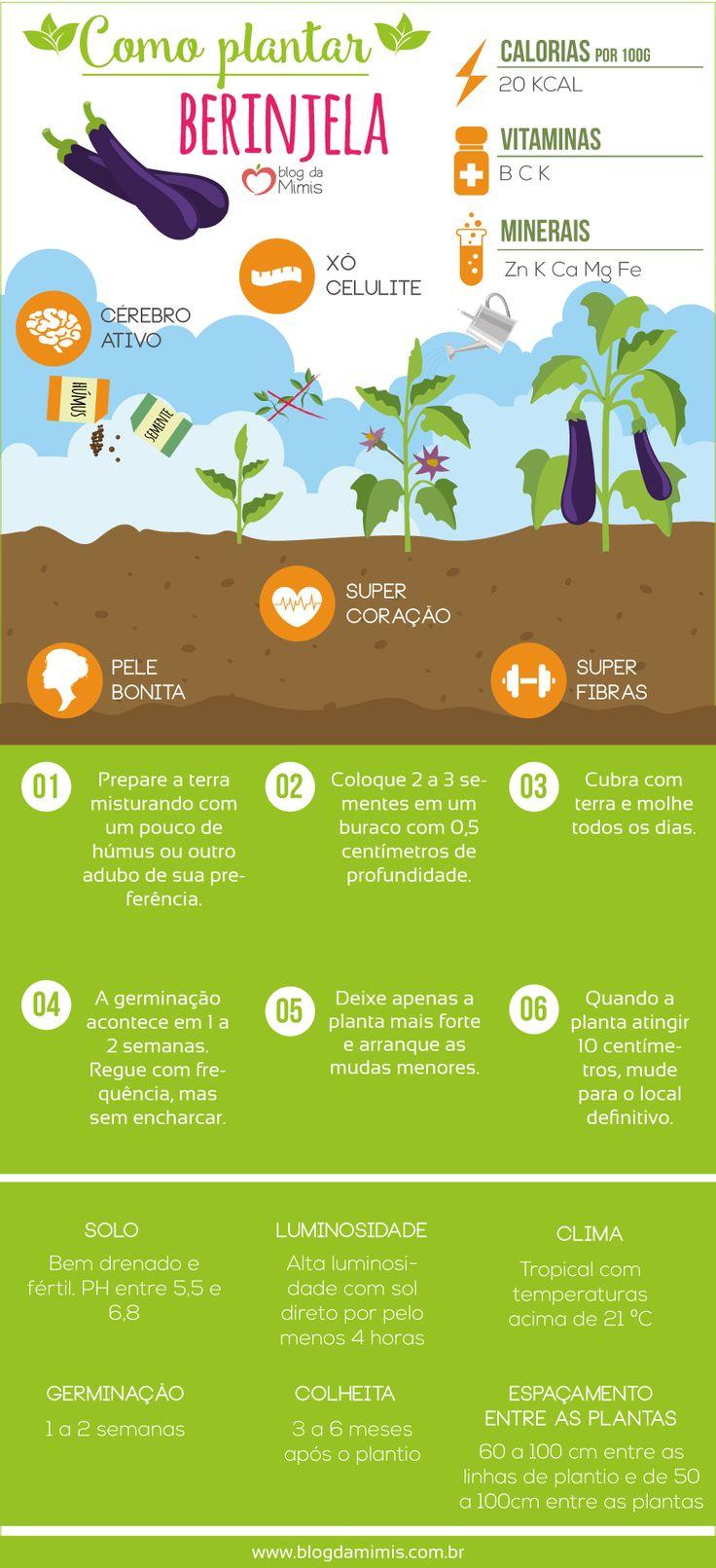 Como plantar berinjela: dicas e benefícios - Blog da Mimis #berinjela #horta #diet #benefícios #plantação #quintal