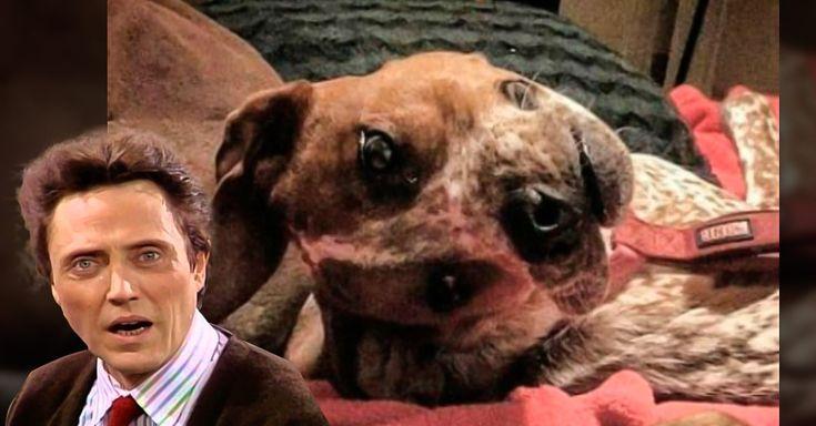 El público ha estado desconcertado respecto a una fotografía que muestra una ilusión óptica, ya que lo que se mira al principio parece ser un perro desfigurado