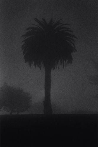 Palm Tree, San Francisco, California, USA, 1993