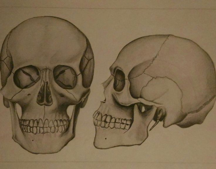 Skull #anatomy#pencils#workhard#shades
