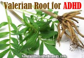 Using Valerian Root for ADHD from NaturalAlternativeRemedy.com #health #herbs #adhd