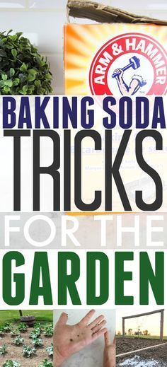 Some really useful tips for incorporating baking soda into your gardening plans!