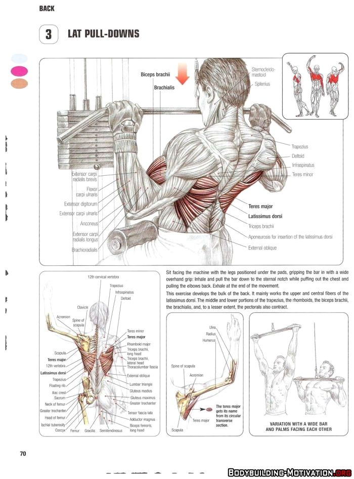 How To Gain Weight Triceps Workout Workout Exercise Fitness