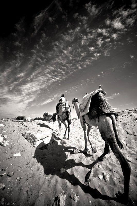 Rijden op een #kameel in de #woestijn van #Cairo #Egypte