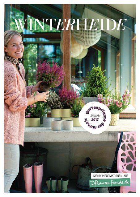 Die Gartenpflanze des Monats Januar - Winterheide alias Erika Mehr unter: Pflanzenfreude.de #Garten #Januar #Winterheide #Erika