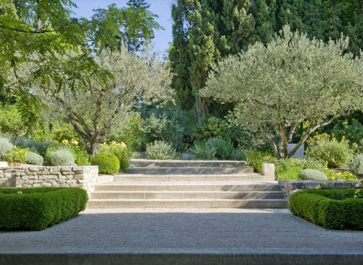 139 best Trees images on Pinterest | Mediterranean garden, Gardening ...