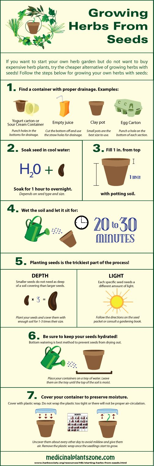 Growing Herbs from Seeds Infographic                                                                                                                                                     More