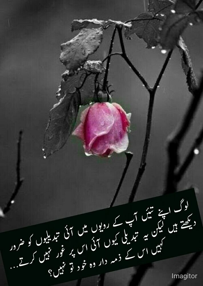 Pin By Sobia Khan On Quotes Color Splash Pink Color Splash Photography Color Splash