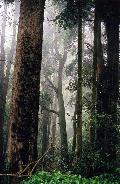 Foggy KANGAROO VALLEY by jgspics on Flickr.
