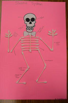 Good for skeletal system